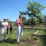 Аmbassador J.Warlick plants Tulip treeПоланник Уорлик засажда дърво лале